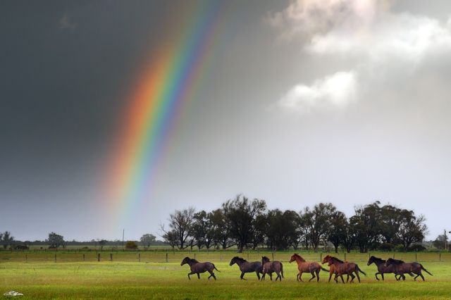 A free fine art photograph of horses running under a rainbow