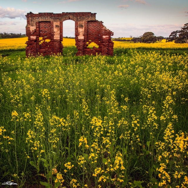 An old ruin standing in a canola field in Western Australia