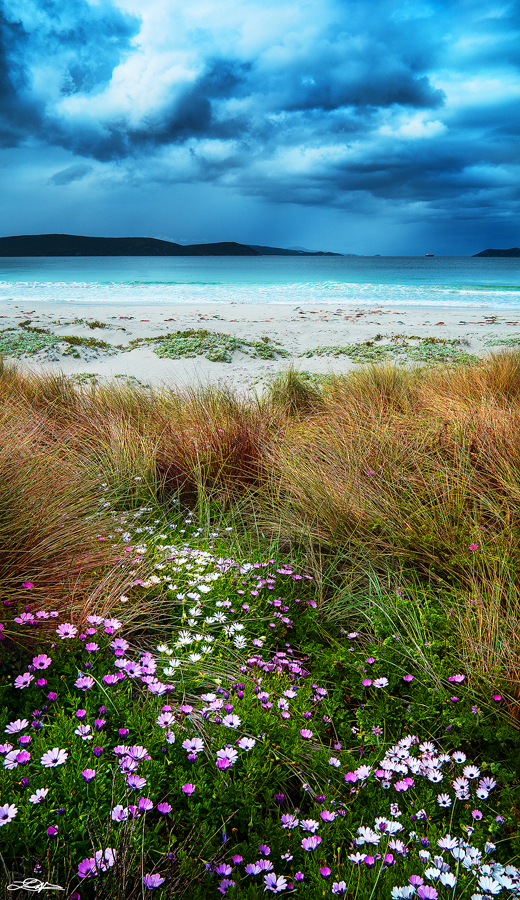The flowers at Middleton Beach located near Albany, Western Australia