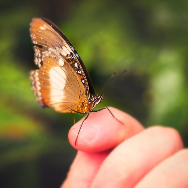 Butterfly 011